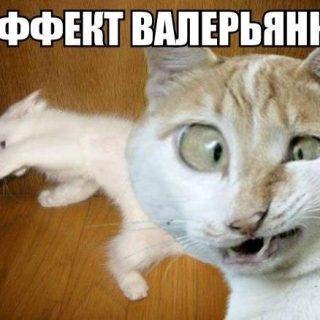 Смешные фото животных с надписями до слез - смотреть ржачные картинки 8