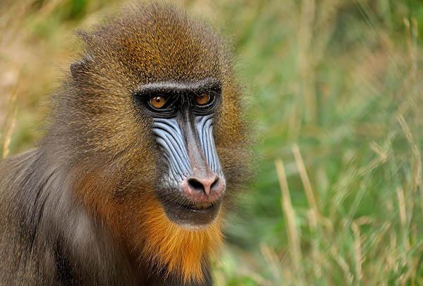 Фото красивых животных мира - удивительные и прикольные 15