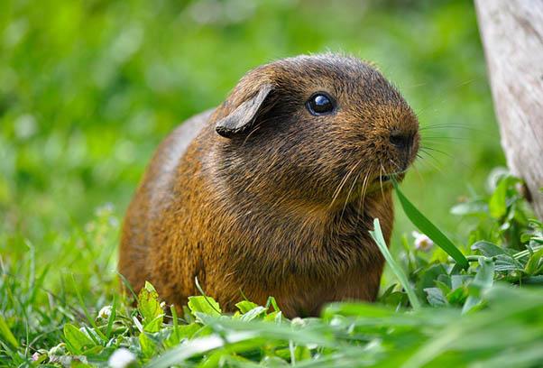 Фото красивых животных мира - удивительные и прикольные 8