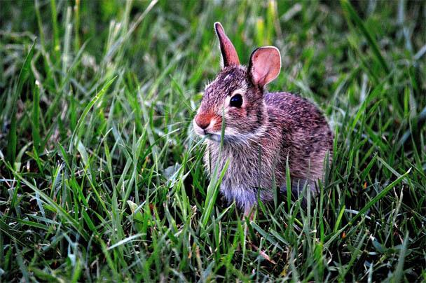 Царства живой природы и фото милых животных - смотреть бесплатно 1