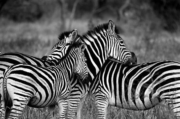 Царства живой природы и фото милых животных - смотреть бесплатно 13
