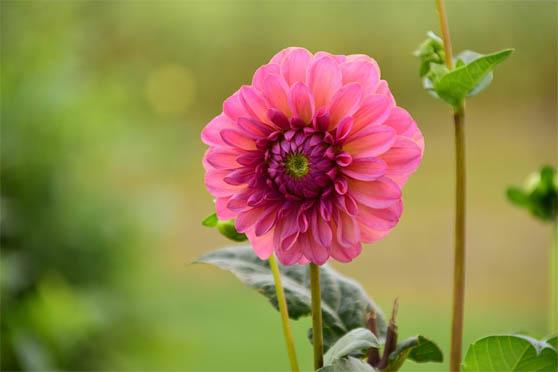 Цветы фото красивые - скачать бесплатно, удивительные, классные 1