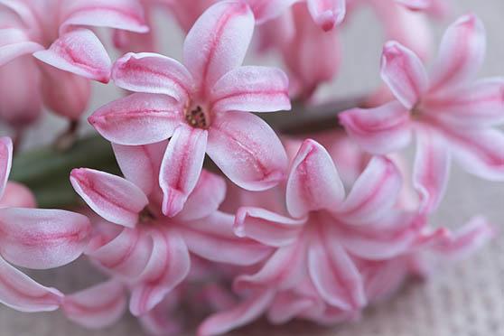 Цветы фото красивые - скачать бесплатно, удивительные, классные 12