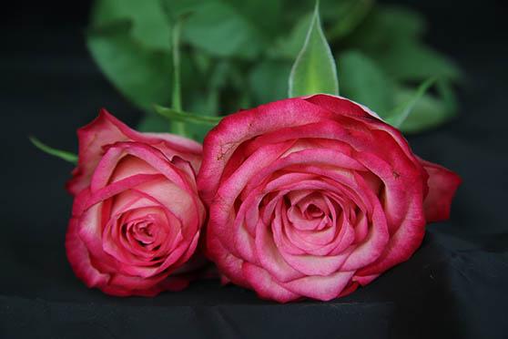 Цветы фото красивые - скачать бесплатно, удивительные, классные 13