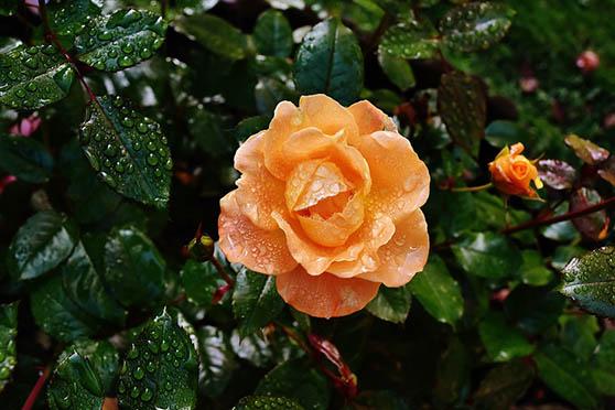 Цветы фото красивые - скачать бесплатно, удивительные, классные 14