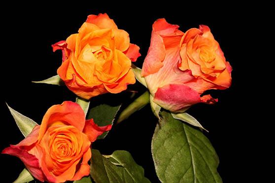 Цветы фото красивые - скачать бесплатно, удивительные, классные 15