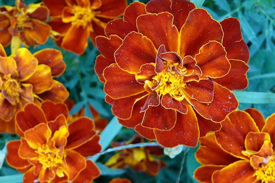 Цветы фото красивые - скачать бесплатно, удивительные, классные 5