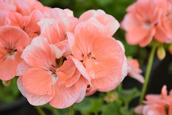 Цветы фото красивые - скачать бесплатно, удивительные, классные 9
