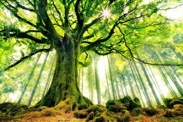Прикольные и красивые - картинки, фото природы 7