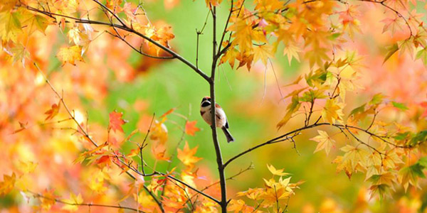 Картинки осень природа, красивые фото осени природа 6