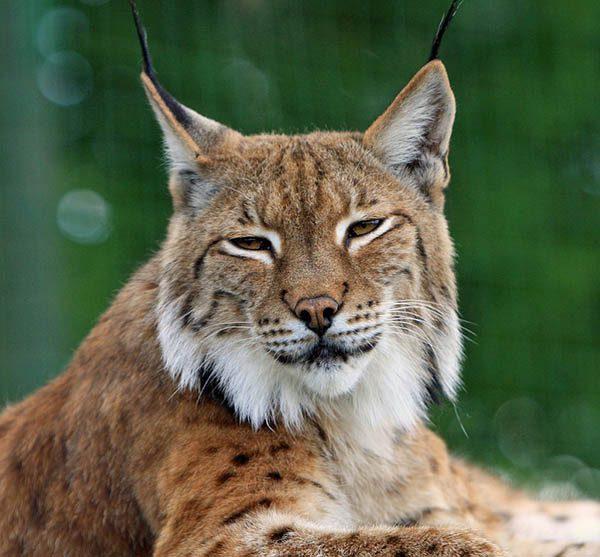 Самые красивые животные в мире фото - смотреть бесплатно 3
