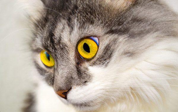 Прикольные фото животных - красивые и смешные, смотреть 6