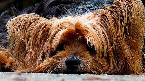 Прикольные фото животных - красивые и смешные, смотреть 10
