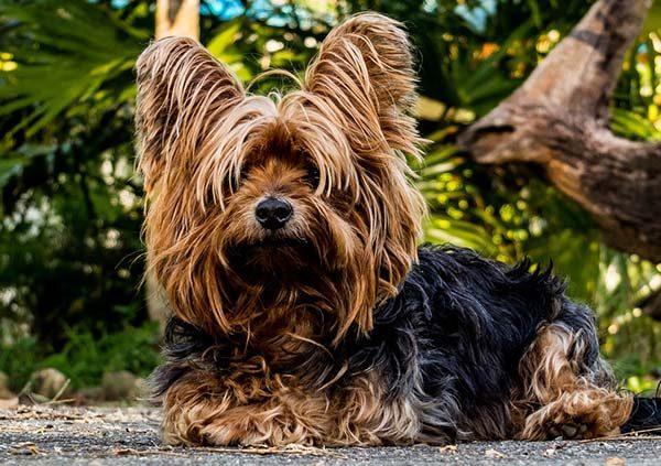 Прикольные фото животных - красивые и смешные, смотреть 11
