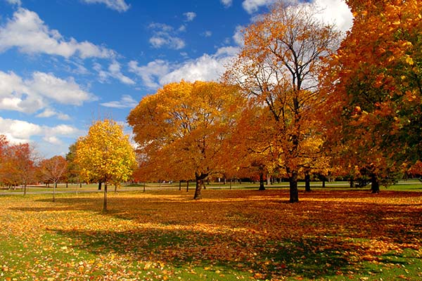 Картинки осень природа, красивые фото осени природа 10