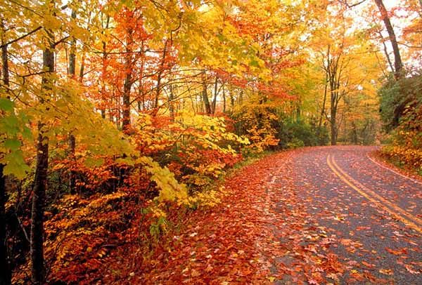 Картинки осень природа, красивые фото осени природа 11