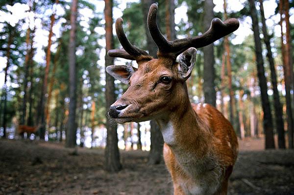 Самые красивые животные в мире фото - смотреть бесплатно 9