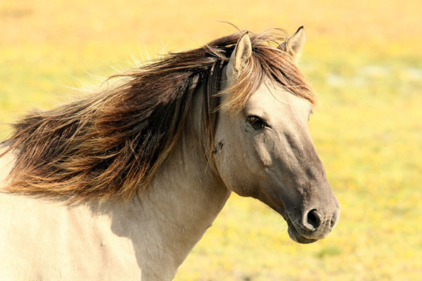 Самые красивые фото животных - прикольные, крутые, классные 10