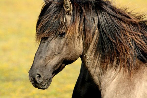 Самые красивые фото животных - прикольные, крутые, классные 11