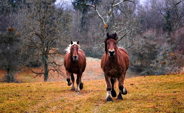 Самые красивые фото животных - прикольные, крутые, классные 13