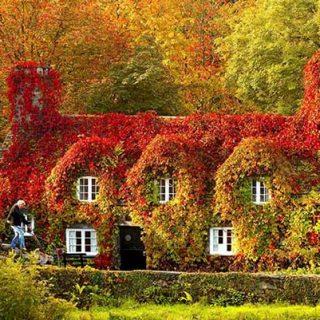 Картинки осень природа, красивые фото осени природа 12