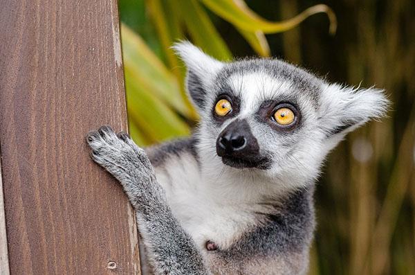 Прикольные фото животных - красивые и смешные, смотреть 14