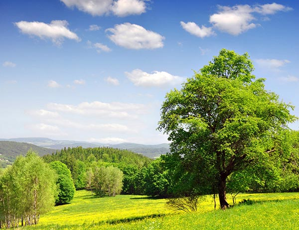 Картинки лето природа, красивые картинки пейзажи природы 11