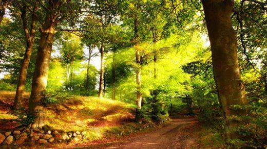 Картинки лето природа, красивые картинки пейзажи природы 12