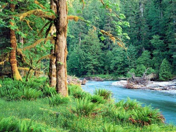 Картинки лето природа, красивые картинки пейзажи природы 10