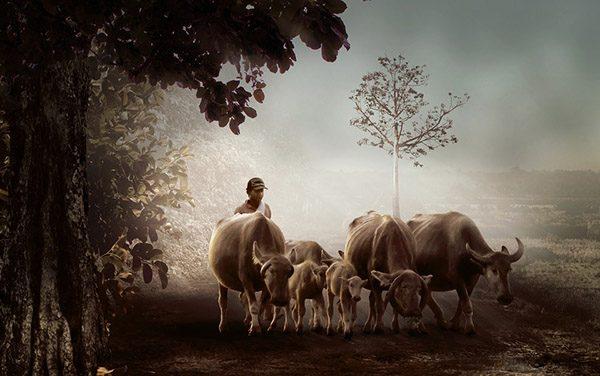 Прикольные фото животных - красивые и смешные, смотреть 15