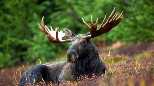 Самые красивые животные в мире фото - смотреть бесплатно 10