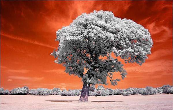 Прикольные и красивые - картинки, фото природы 10