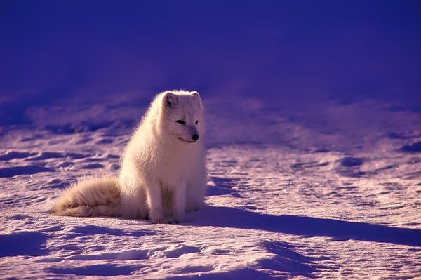 Самые красивые животные в мире фото - смотреть бесплатно 11