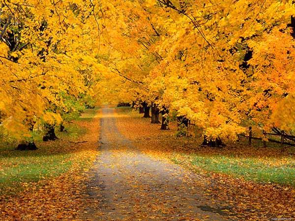 Картинки осень природа, красивые фото осени природа 13