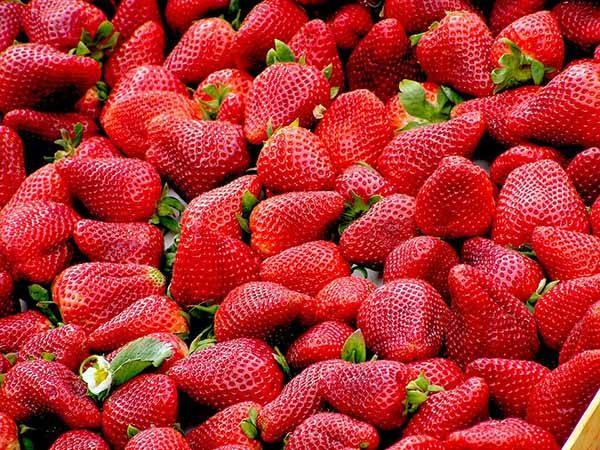 Овощи и фрукты картинки для детей - прикольные и красивые 9