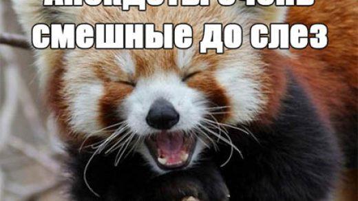 Анекдоты очень смешные до слез - читать бесплатно, прикольные, веселые заставка