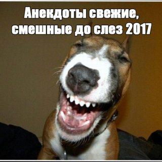 Анекдоты свежие, смешные до слез 2017 - читать бесплатно заставка