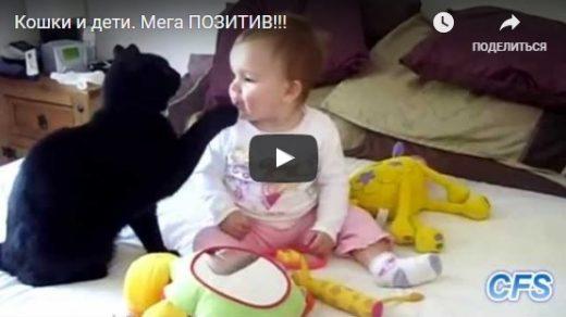 Видео про котов смешное детям, прикольные, веселые, ржачные