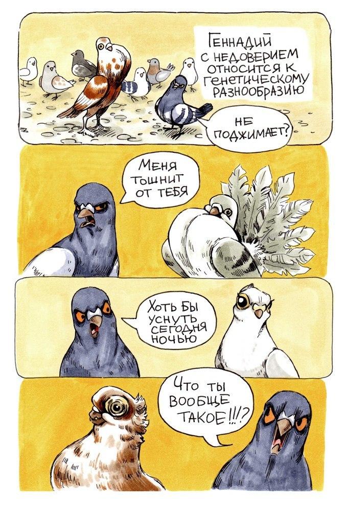 Голубь Геннадий смешной комикс - смотреть бесплатно 5