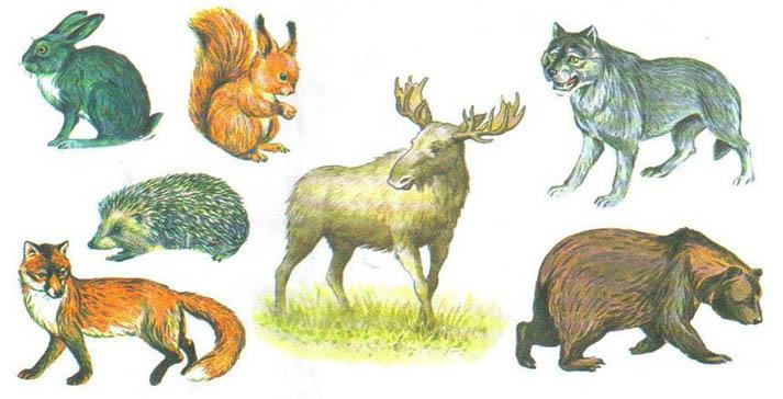 Дикие животные - картинки для детей, прикольные, красивые 2