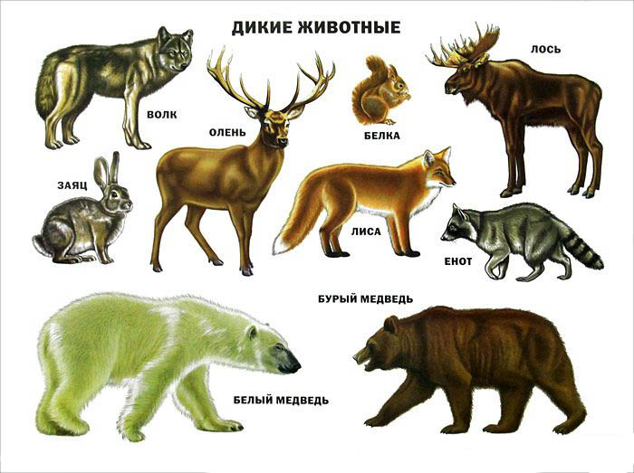 Дикие животные - картинки для детей, прикольные, красивые 4