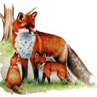 Дикие животные - картинки для детей, прикольные, красивые 6