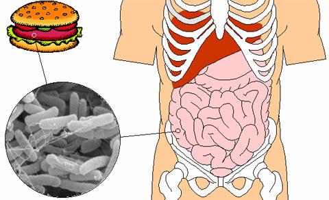 Дисбактериоз кишечника - симптомы лечение у взрослых и детей 1