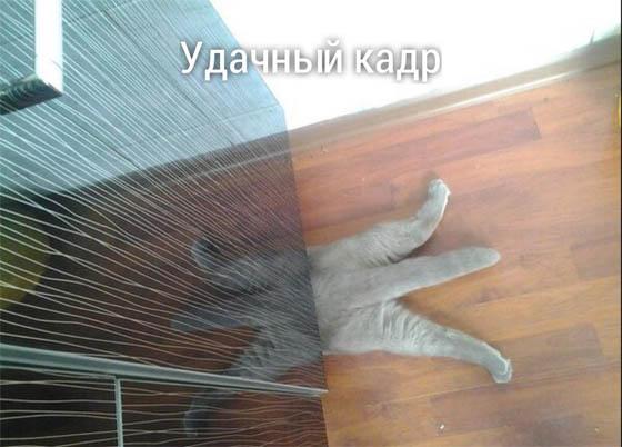 Смотреть картинки смешные животные онлайн бесплатно