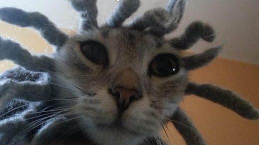 Забавные животные - фото с надписями, смешные, прикольные 18