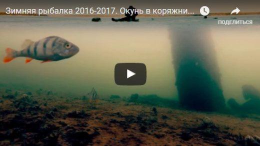 Зимняя рыбалка на окуня - видео интересные, прикольные, удивительные