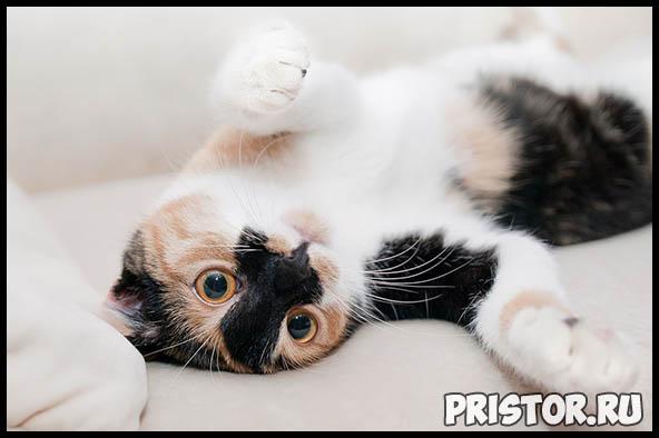 Как кошки проявляют свою любовь к хозяину - основные признаки 1