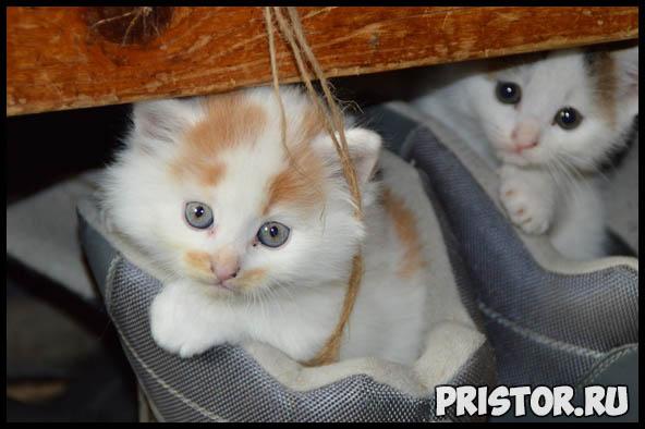 Как кошки проявляют свою любовь к хозяину - основные признаки 2