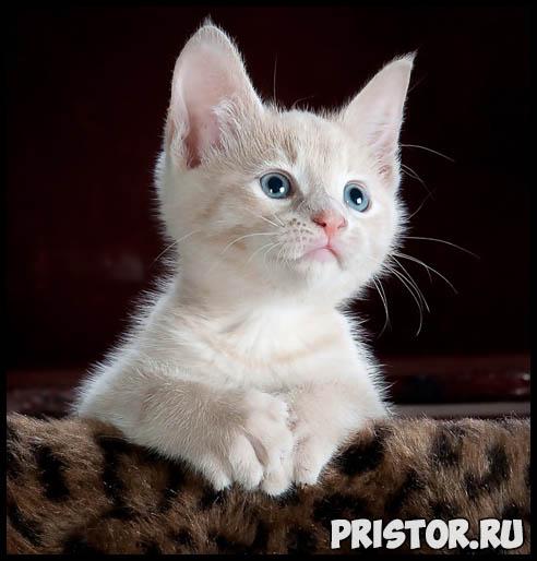 Как кошки проявляют свою любовь к хозяину - основные признаки 3