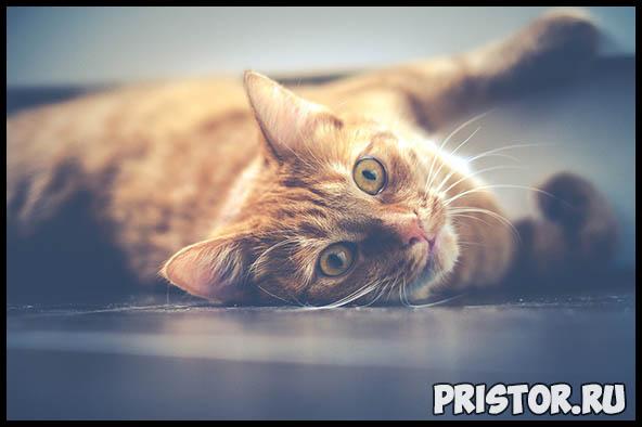 Как кошки проявляют свою любовь к хозяину - основные признаки 4